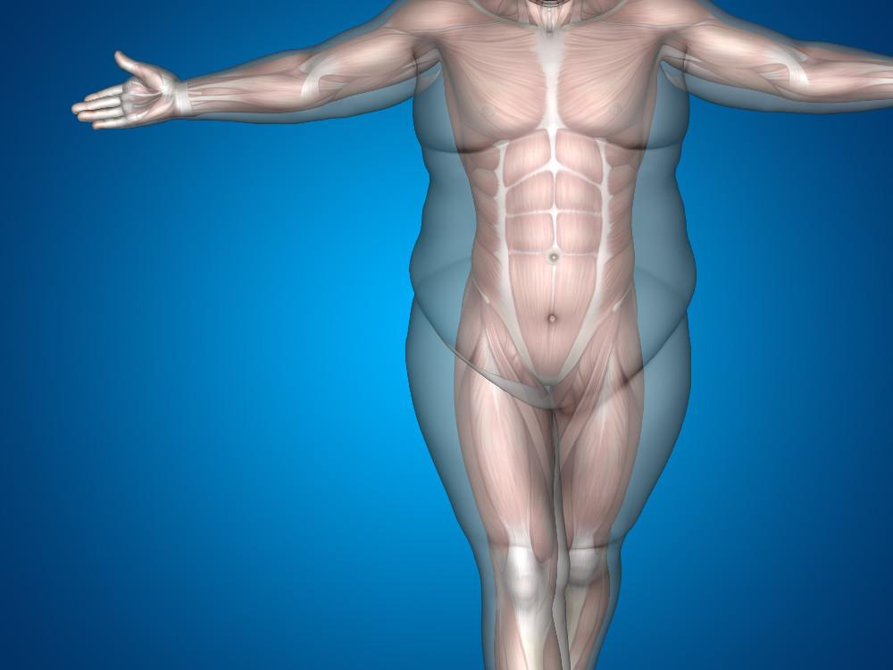 Josh-Hillis-weight-loss-progress-muscle-fat - On Target Publications