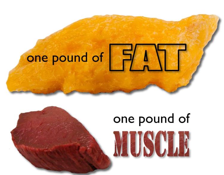 Sophia-Drysdale-resistance-training-fat-muscle